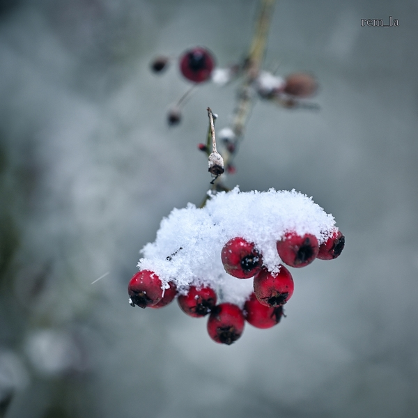 bois,celie,nature,neige