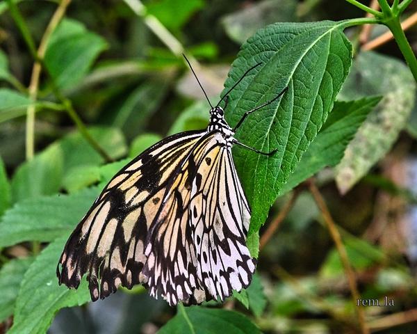 papillon,sanguinet,paradis,landes
