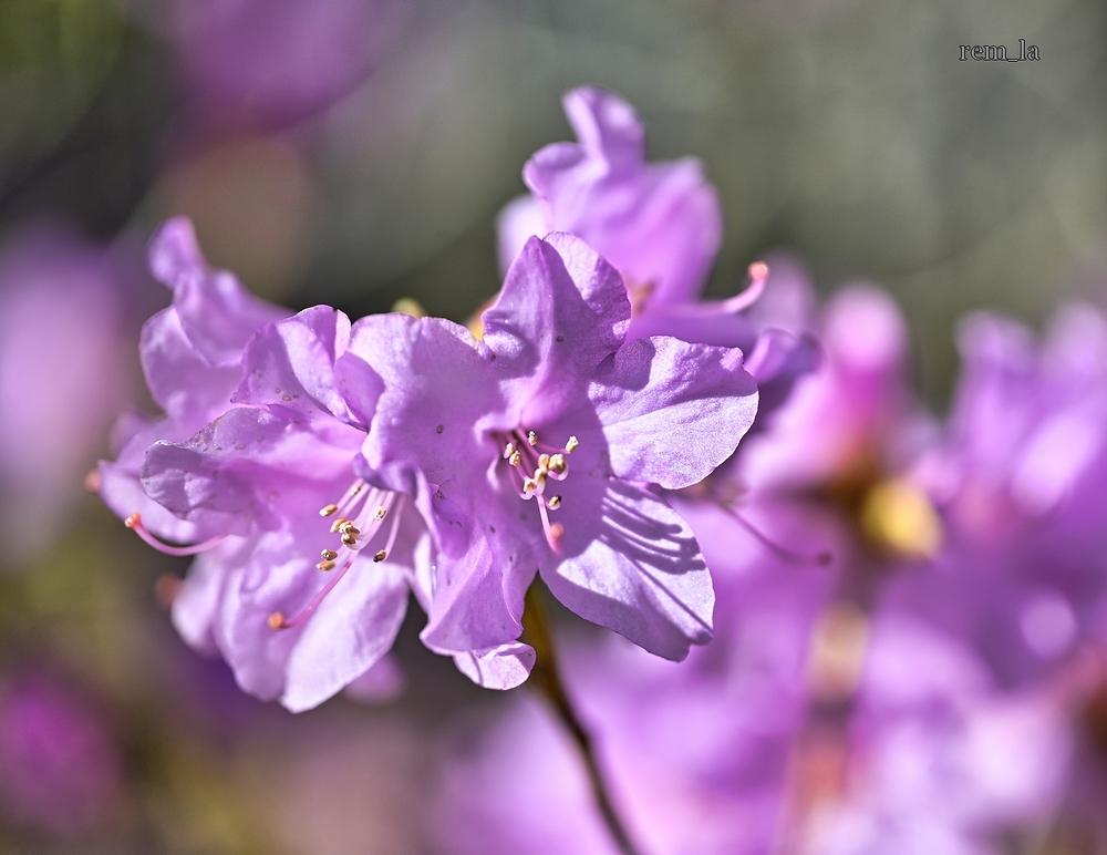 fleur,parc,vincennes