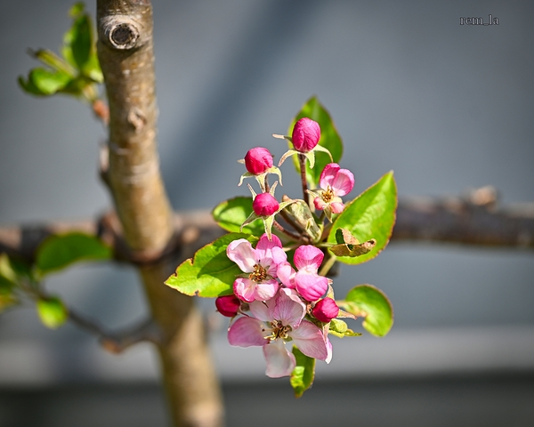 printemps nature fleur