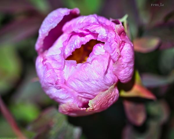 printemps,nature,fleur