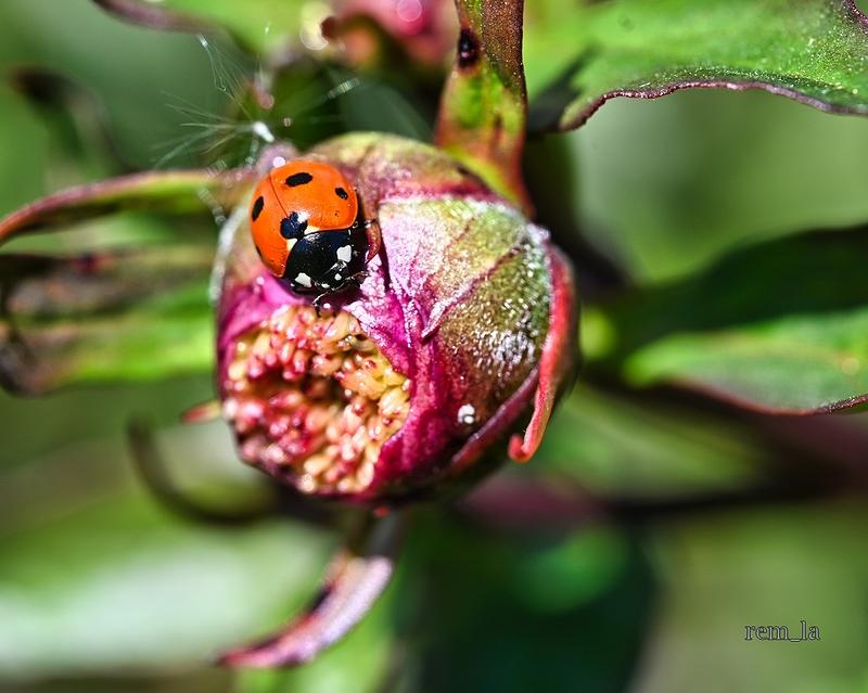printemps,nature,fleur,insecte