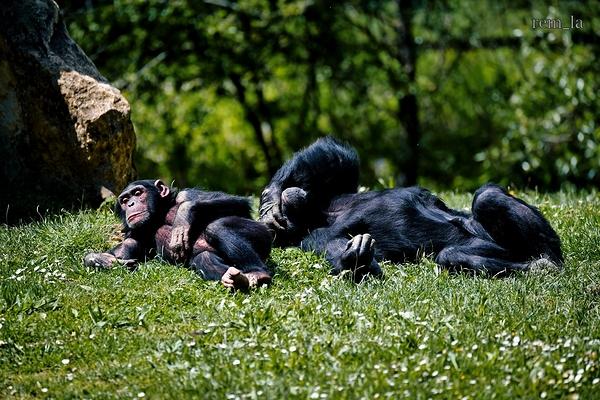 zoo,attily,animal