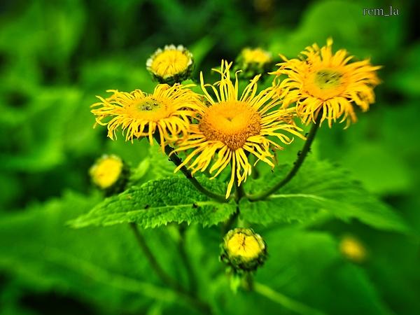 fleur parc floral