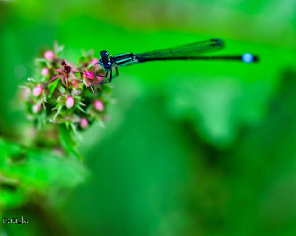 fleur parc floral insecte