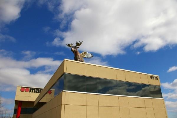 Flying  Moose