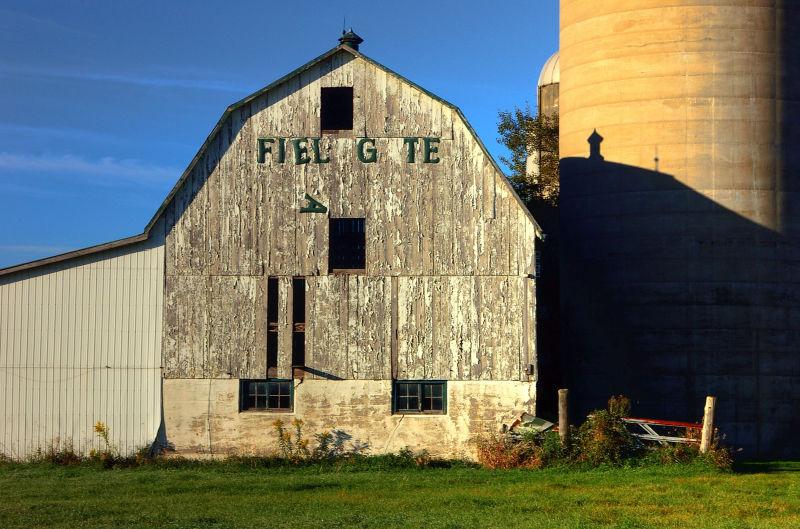 Fieldgate Farm - 2