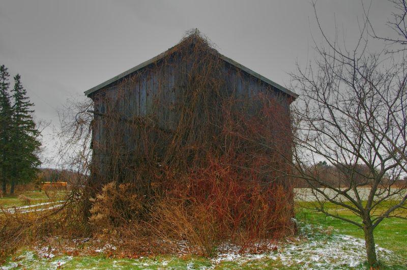 Barn - Back