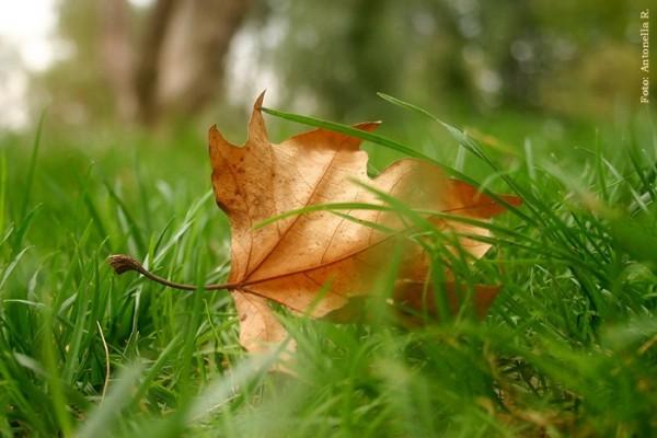 leaf, autum, Italy