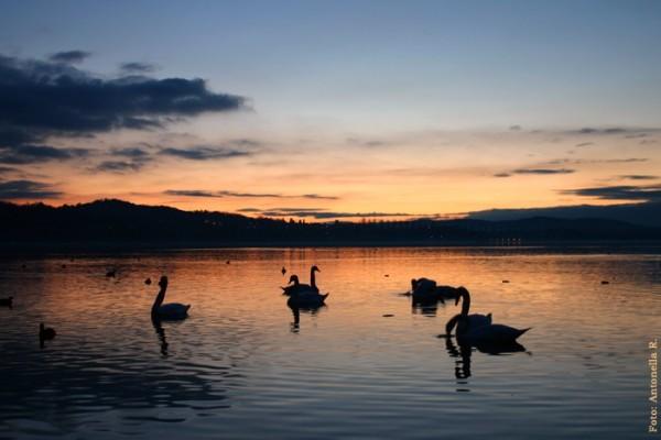Lake Varese Italy swan winter sunset