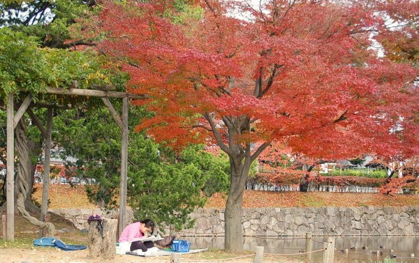 Autumn Scenery 4