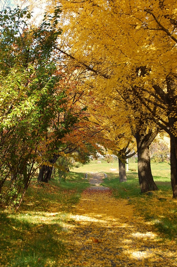 Autumn Scenery 5