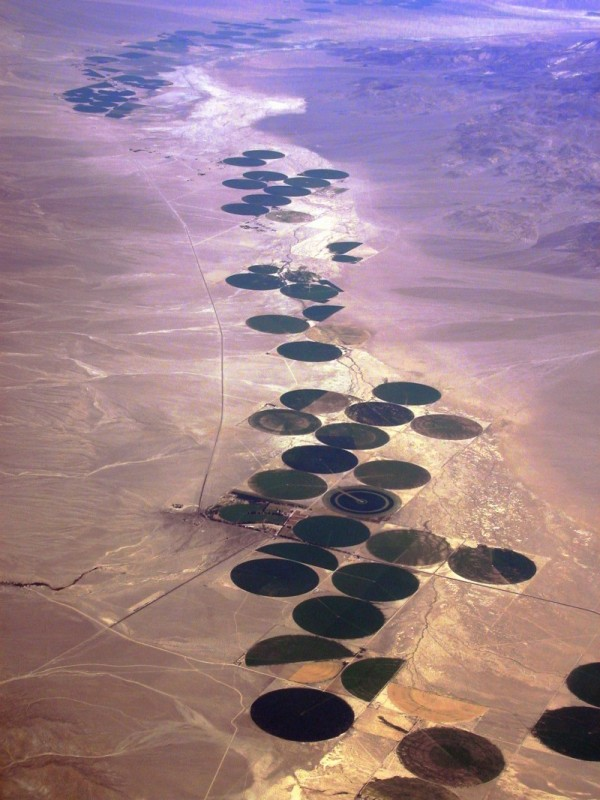 Man-made Oasis in the desert
