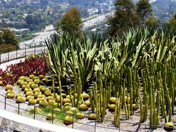Cactus garden Getty Museum