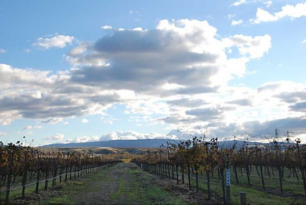 Livermore Valley Vineyard-3