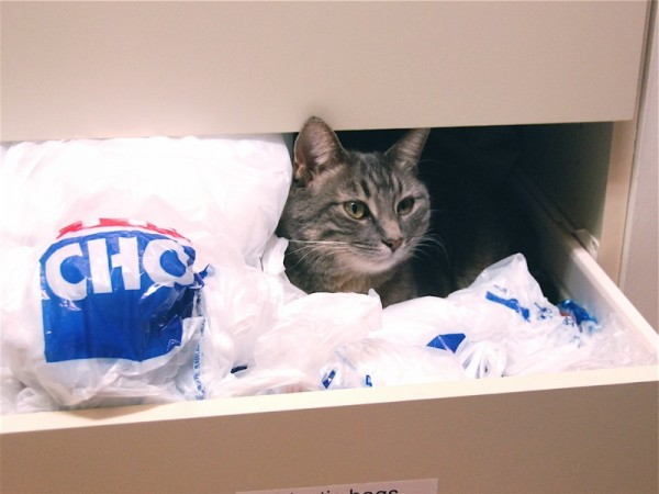 Cat in the Drawer