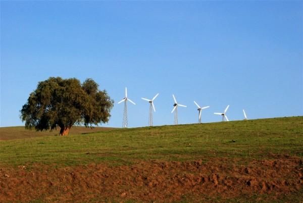 Windmills and tree - Altamont Hills, CA