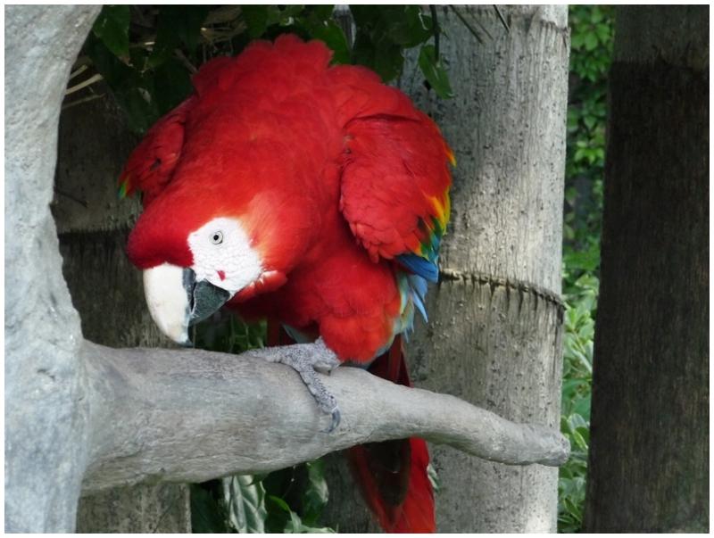 Macaws on the premises of Casa Santo Domingo Hotel