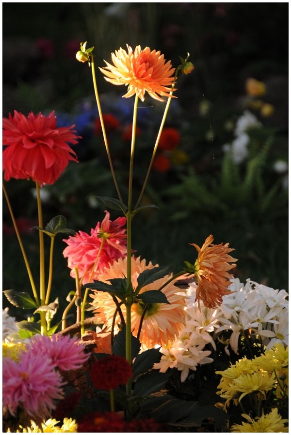 Garden Flowers in late afternoon