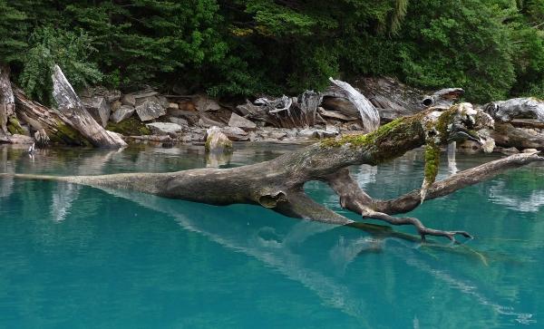 Lago Azul Chilean Patagonia drifwood