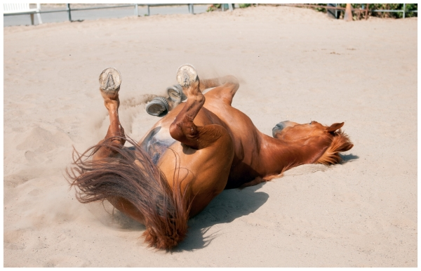 Horse on sand
