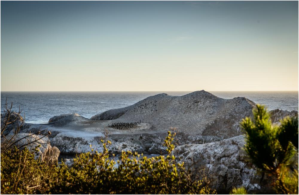 Cormorants Point Lobos California