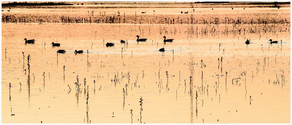 Consumes River Preserve, Sacramento Callifornia