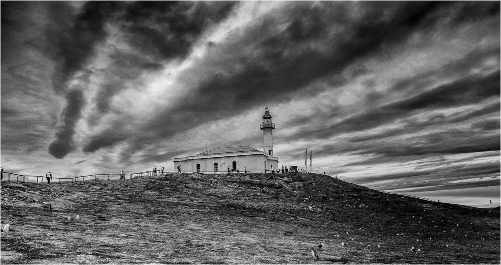 Magdalena Island Chile