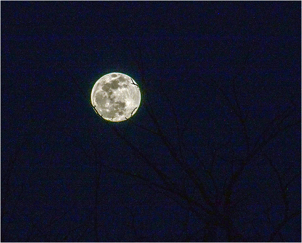 Moon on a Tree