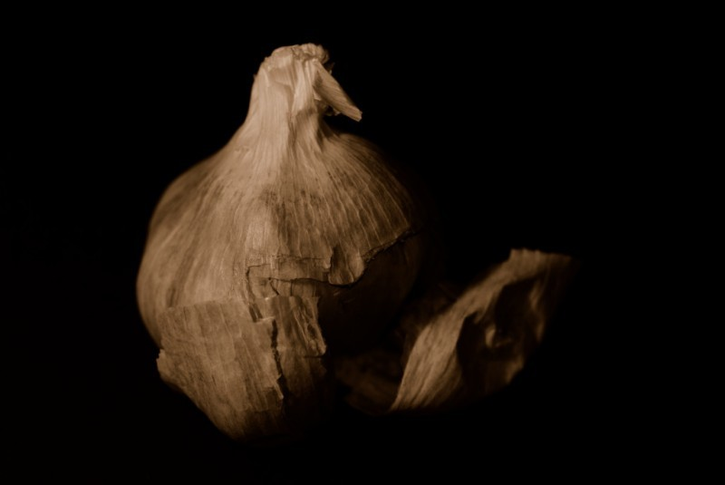 still life of garlic