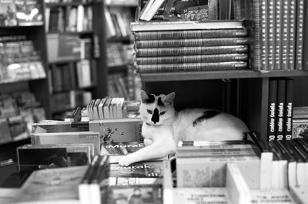 streetphoto, cat