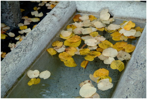 Urban Fall - Fountain
