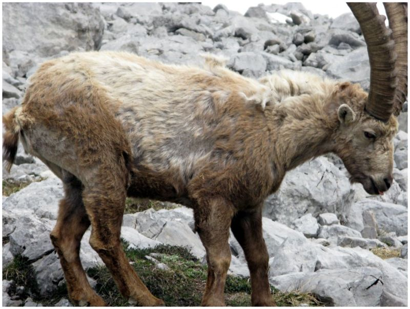 Wooly (L'hiver a fait son chemin)