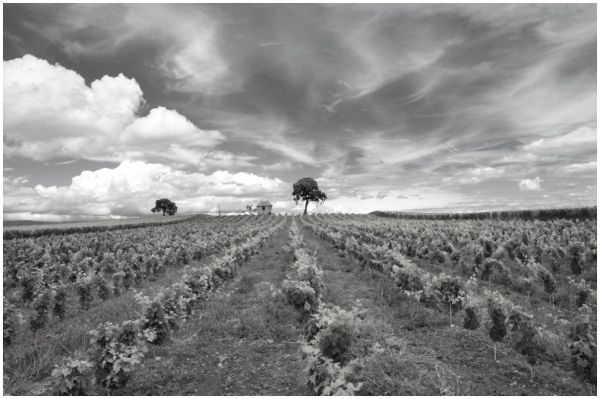 Campagne (The BW side)