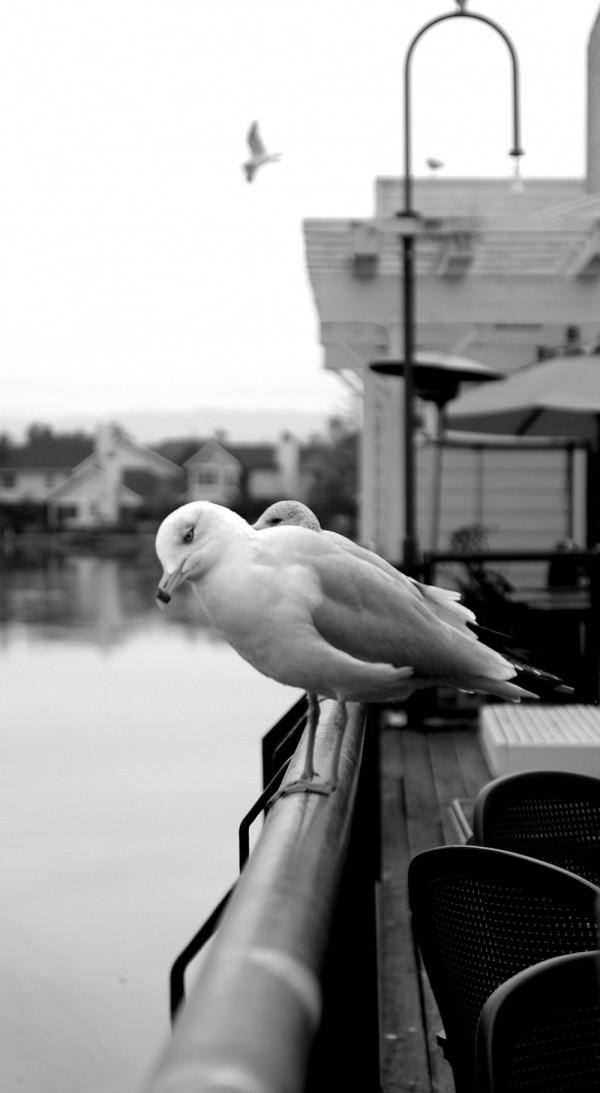 Thinkiing Bird