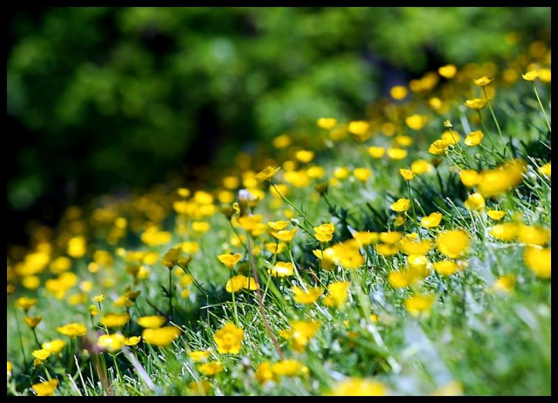 wild flowers in my frontyard