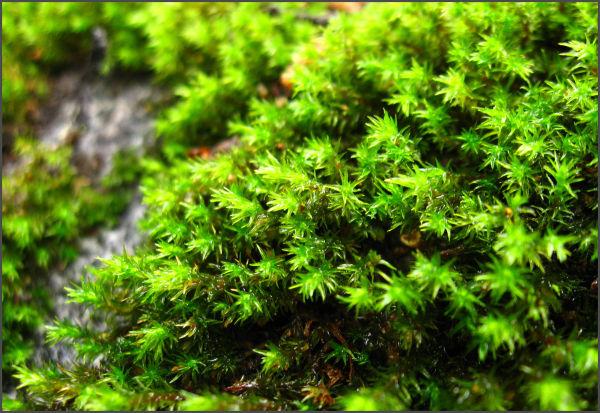 moss on rock macro shot