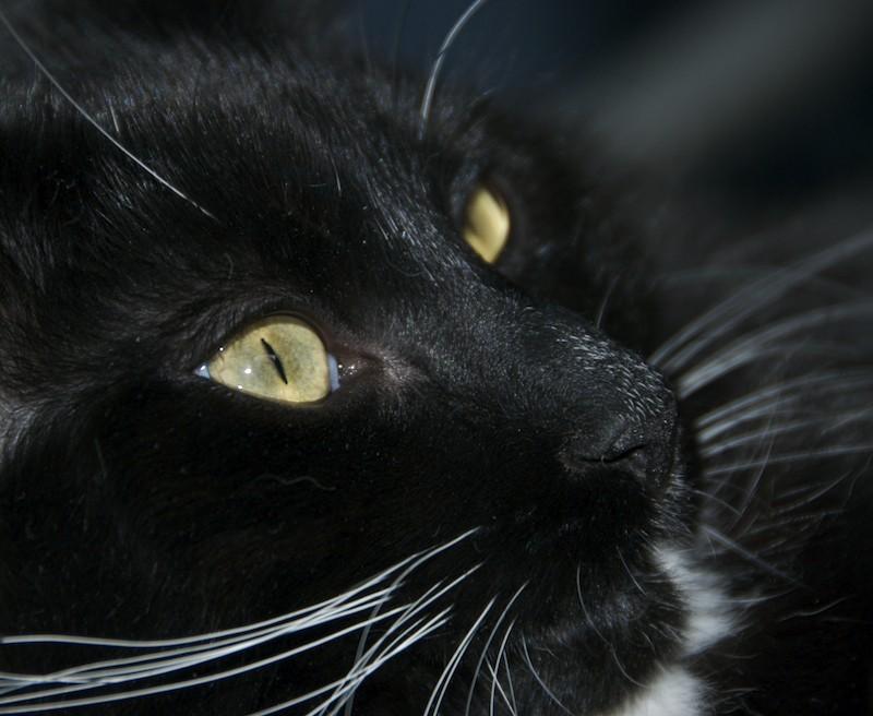 Cousin's Black White Cat
