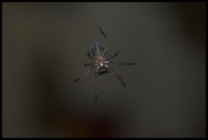 Interesting looking spider in cabin