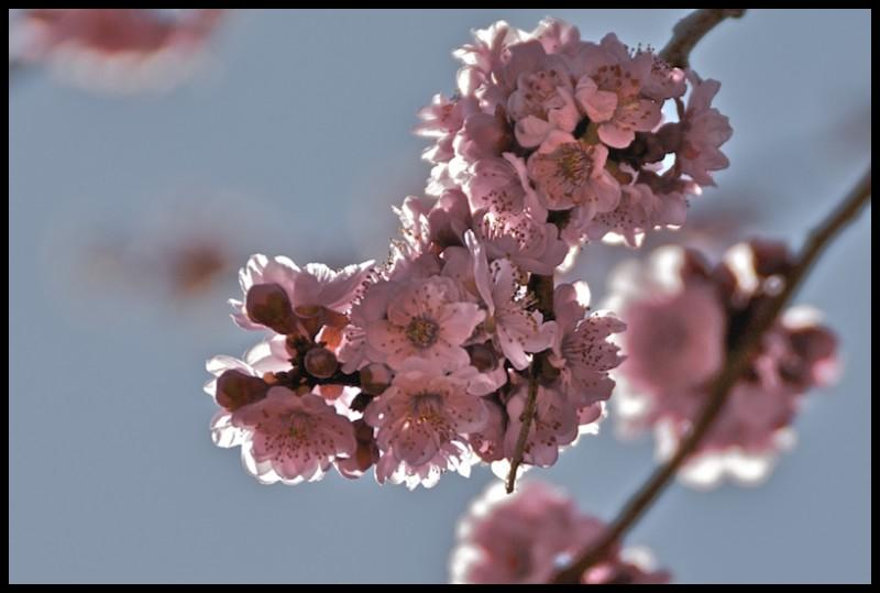 Cluster of Flowers From Diseased Tree