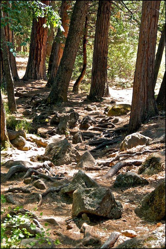 Tattered Hat Creek Fishing Path
