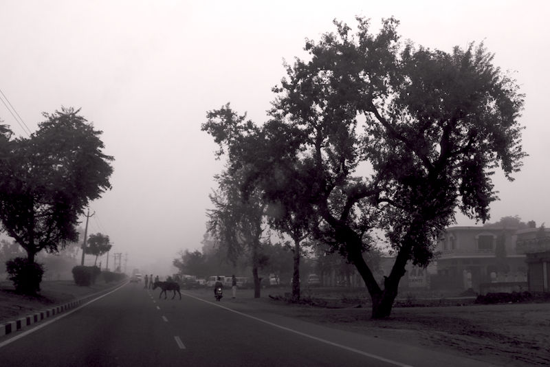 Horse Crossing a Dreary Road (India)