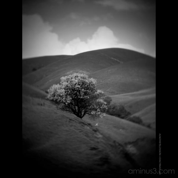 Almond Blossom...
