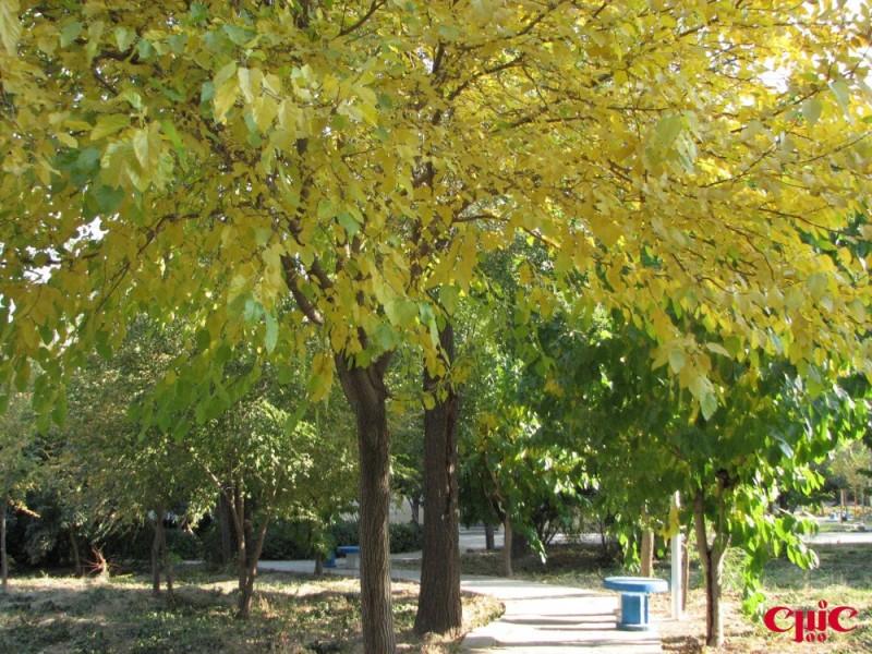 پاييز صنعتي اصفهان