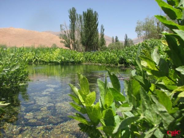 چشمه ديمه