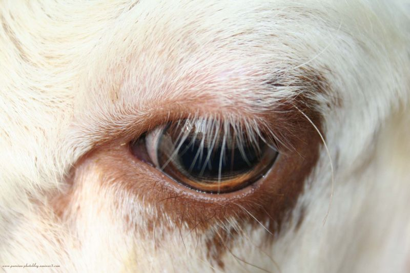 Innocent Eye!