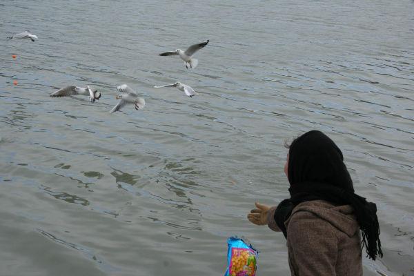 Feeding Birds!