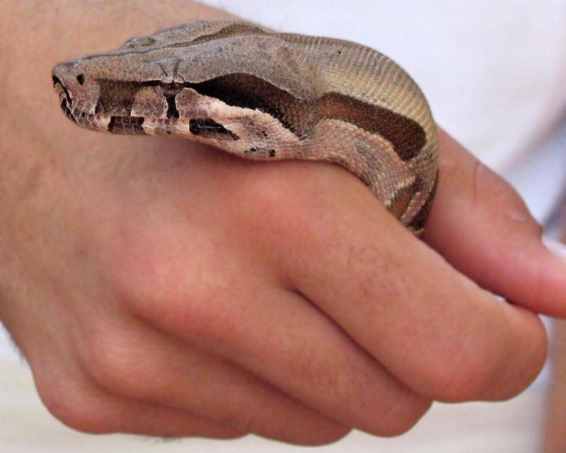 Snake & Hand