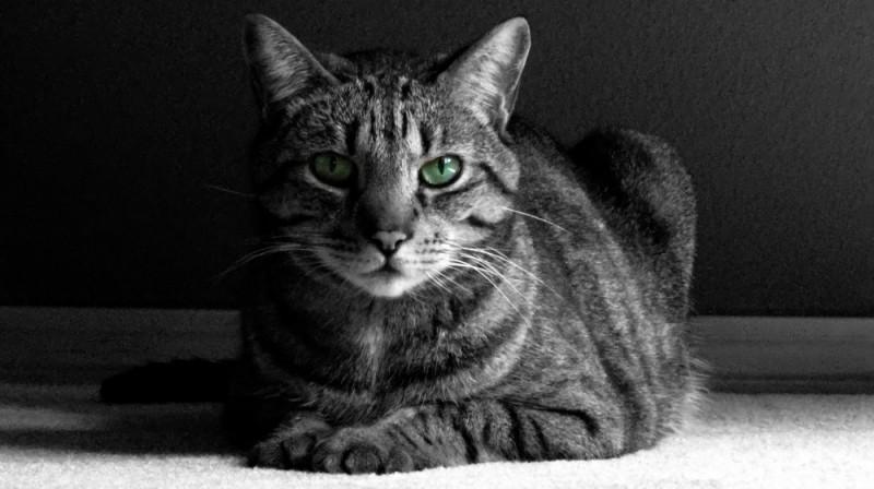 My First Cat Photo