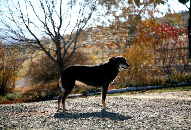 Bagder, The Dog!